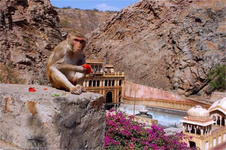 Monkey at the Monkey Temple