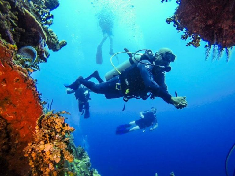 Diving on the island of Catalina
