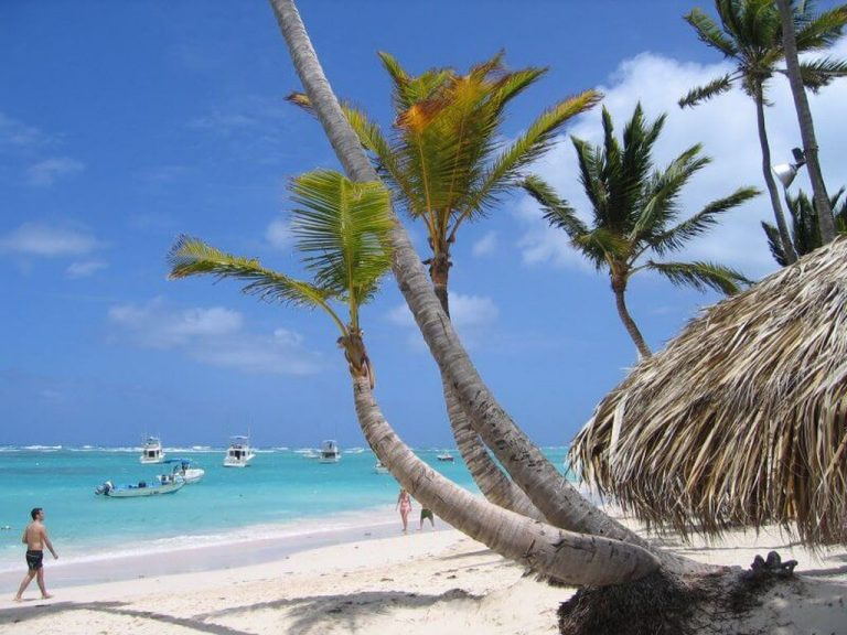 Palm trees on the beach of Bavaro