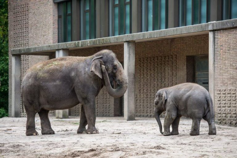 Elephants at the zoo