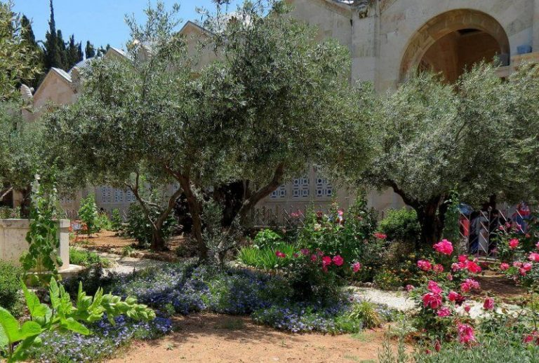 Flowers in Gethsemane Gardens
