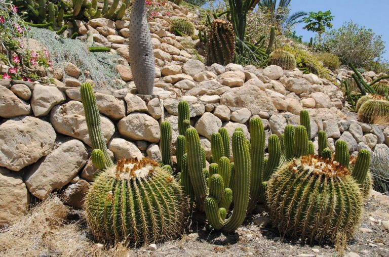 Cacti in the reserve