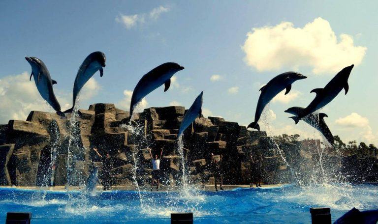 Performance at the dolphinarium in Batumi