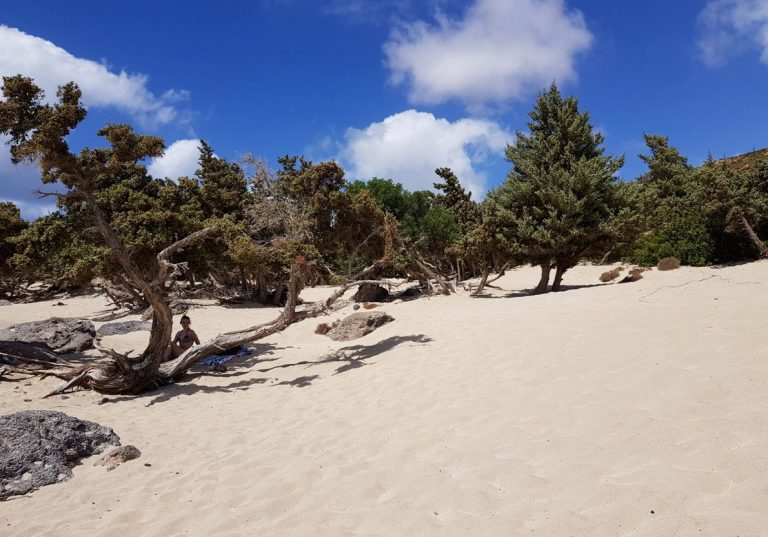 Junipers create the only shade on the beach