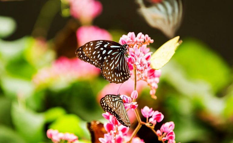 In the butterfly park