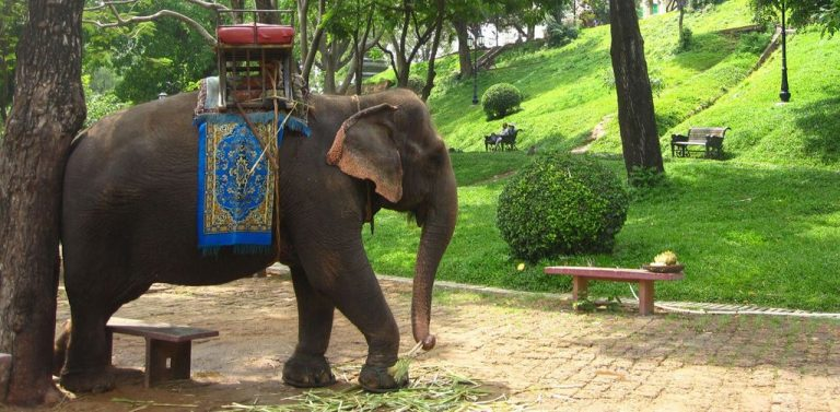 You can ride an elephant