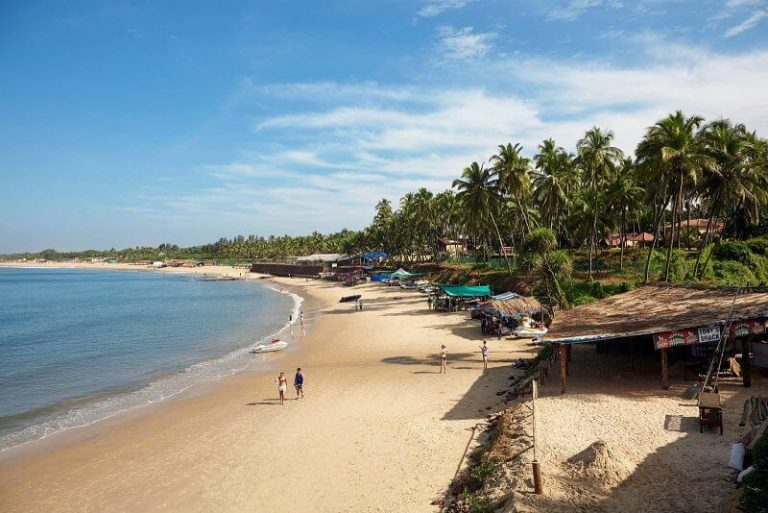 Palm trees on the beach in Candolim