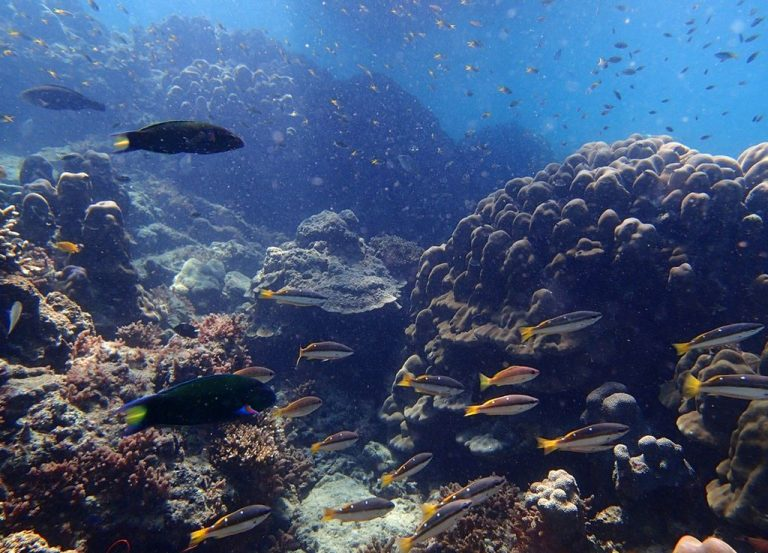 Underwater inhabitants of the reef on the island of Bambu