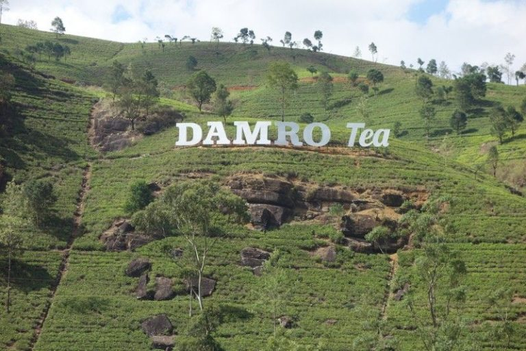 Tea Factory Damro (Macwoods)