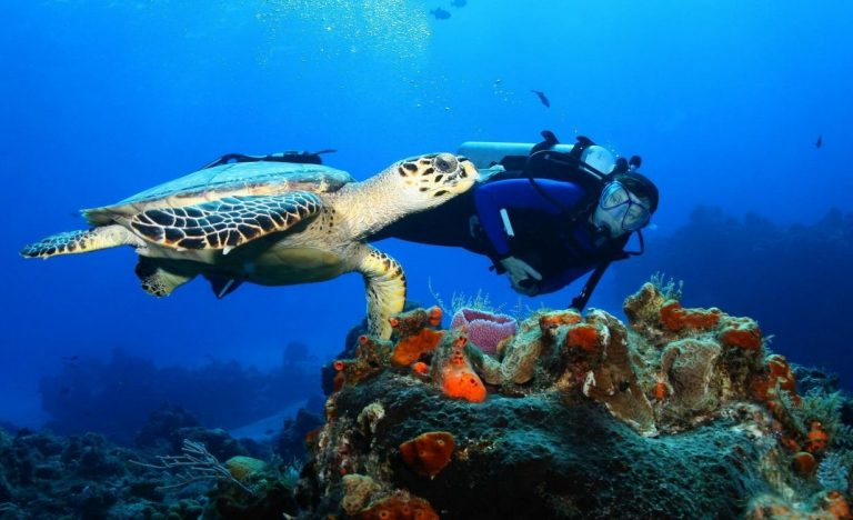 Diving on the island of Curacao