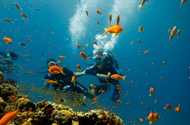 Diving in the Gulf of Eilat