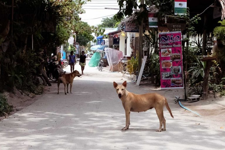 Dogs on the island of Koh Lipe
