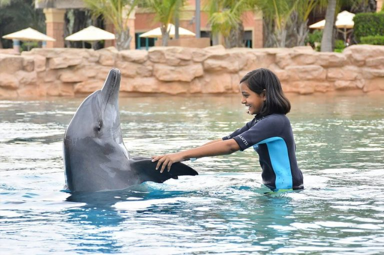 "The program ""Meet Dolphins"""