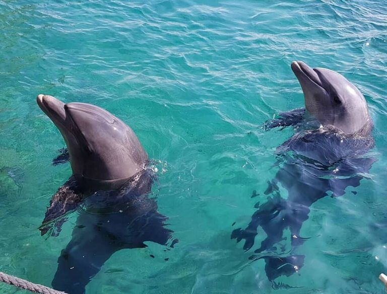 Dolphins in Dolphin Reef