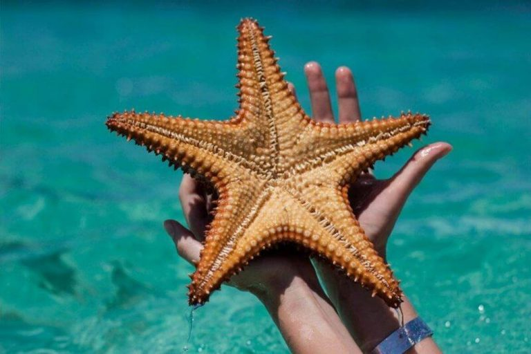 Starfish on Saona Island