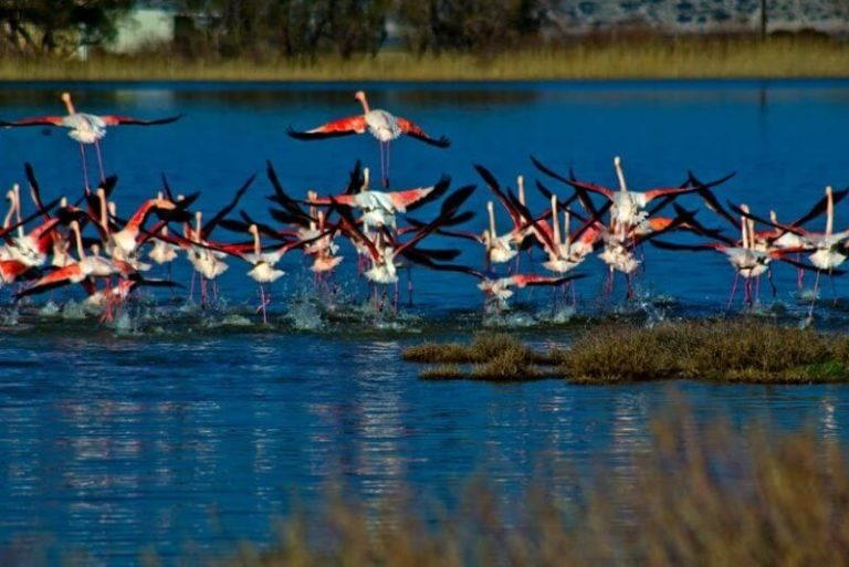 Flamingos on Lake Aliko