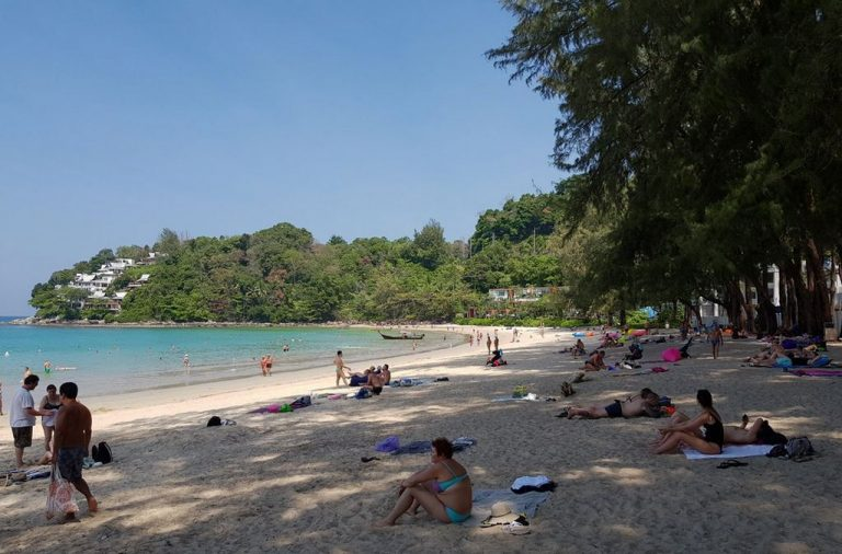 Thai conifers grow on the shore