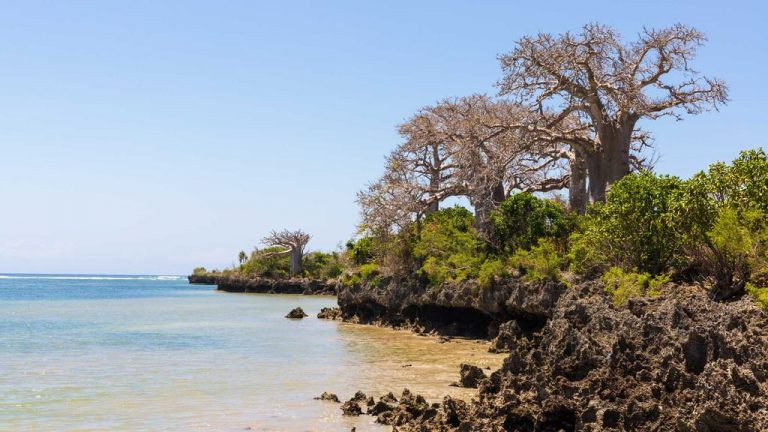 Pemba is a rich reef island of Tanzania