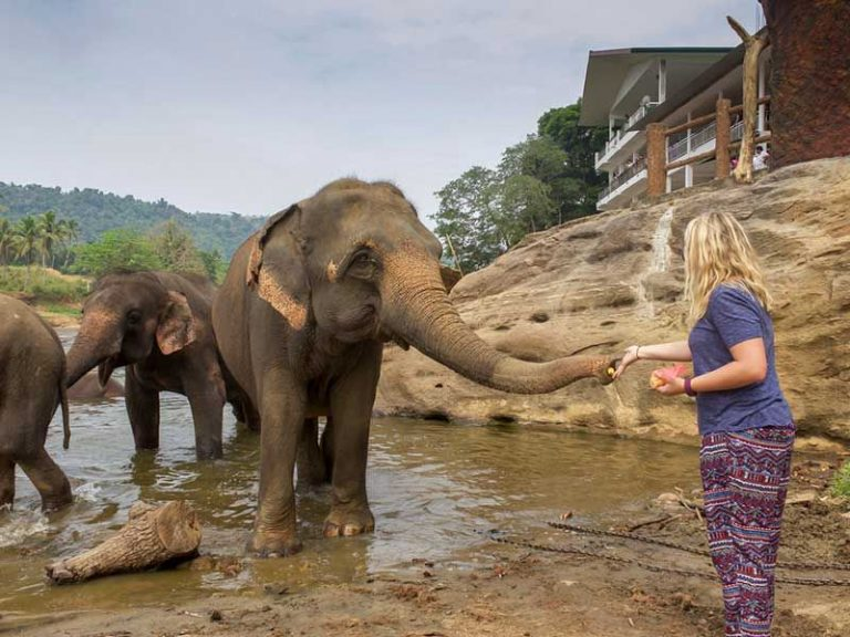 Tourist feeds an elephant