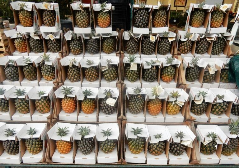 Pineapples of the Azores