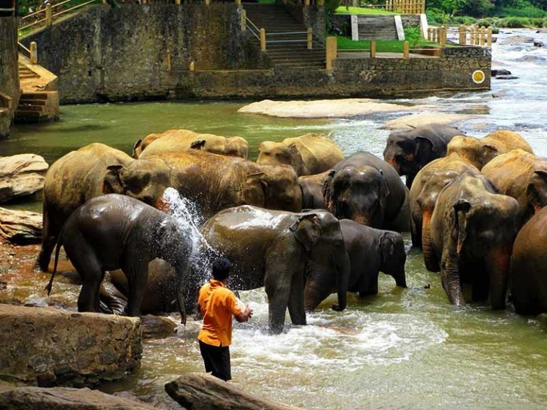 Photo: bathing elephants in Pinnawel