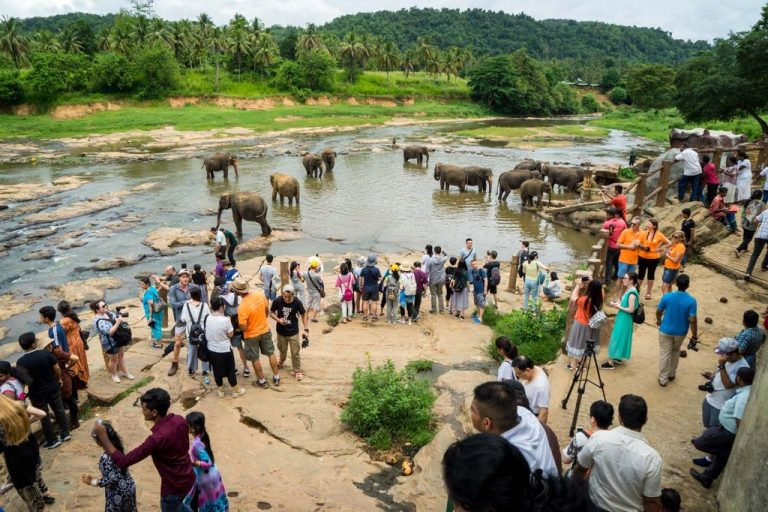 Photo: tourists watching elephants