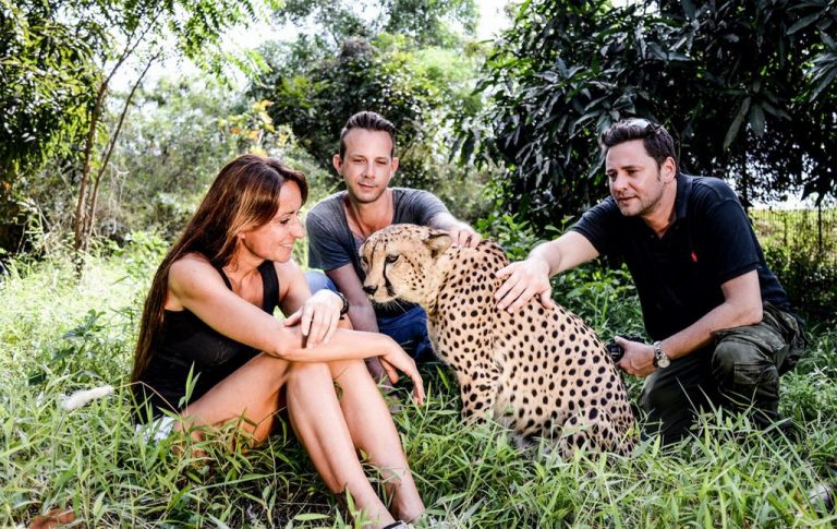 You can chat with cheetahs