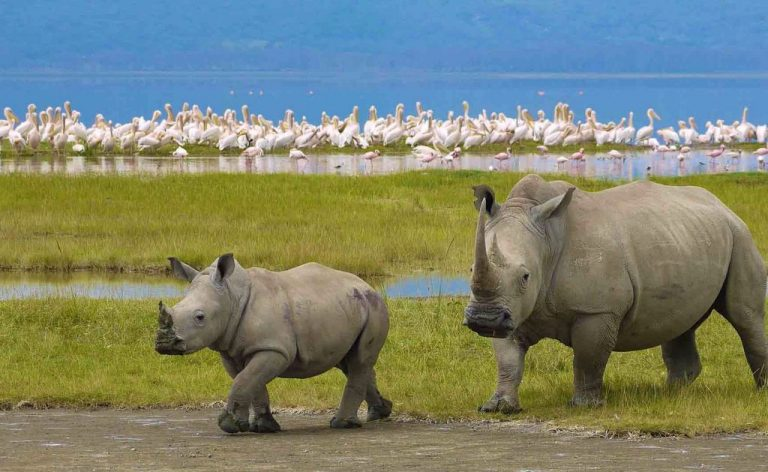 Rhinos in the Ngorongoro Conservation Area