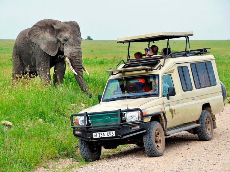 Guided and car safaris