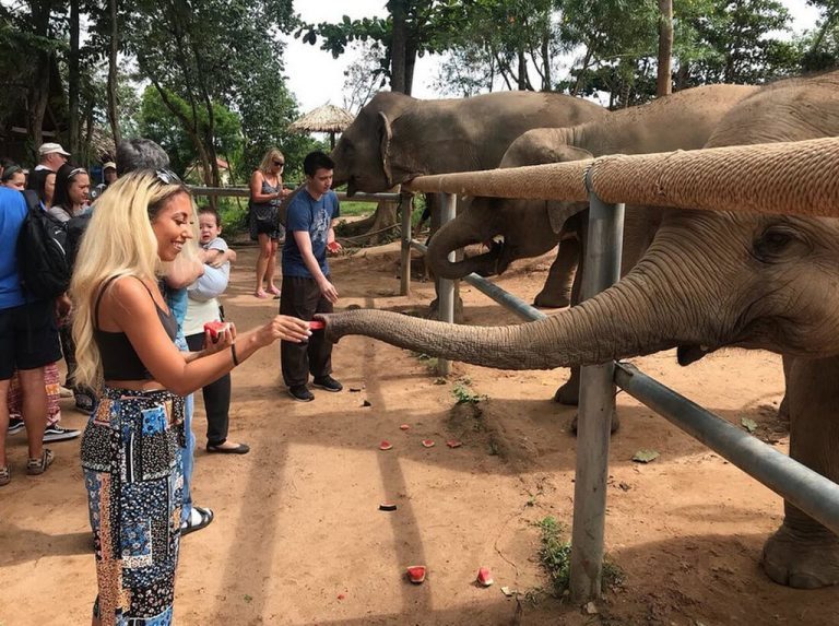 You can feed and stroke elephants