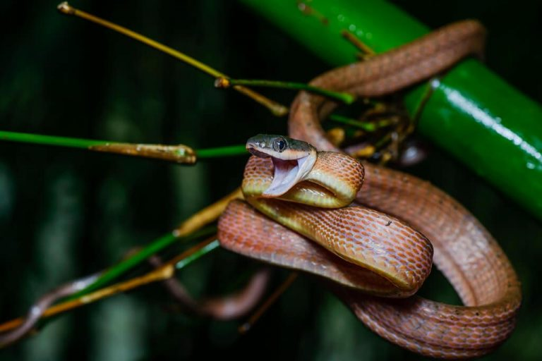 Snakes in the park