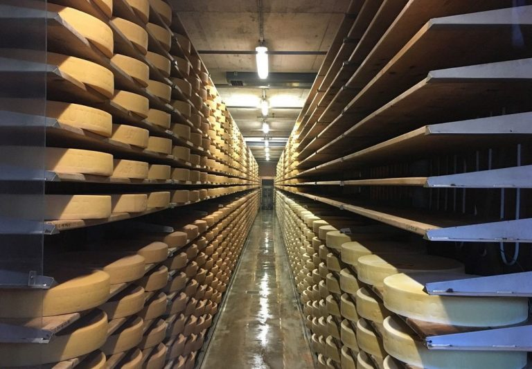 Gruyere cheese ripening stage