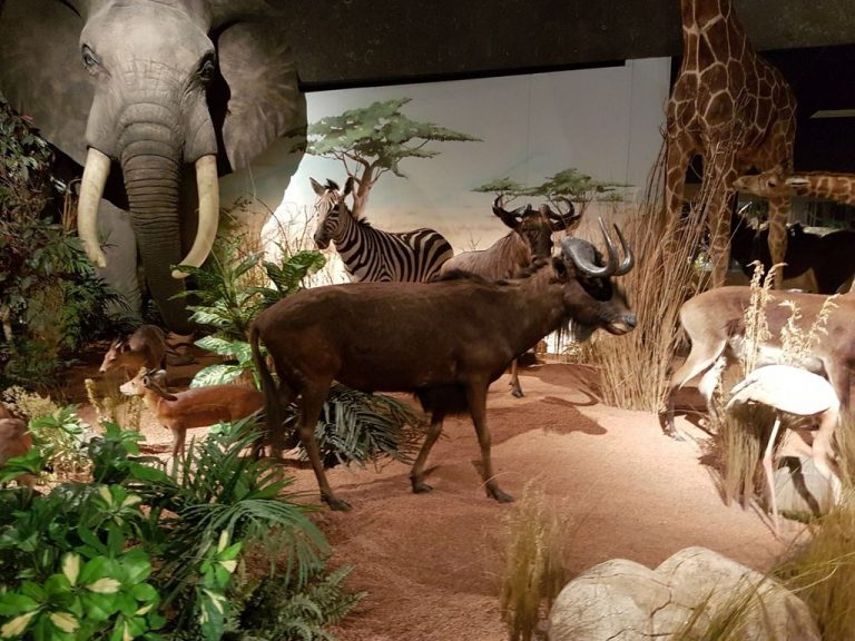 Stuffed Animals at the Museum of Natural History