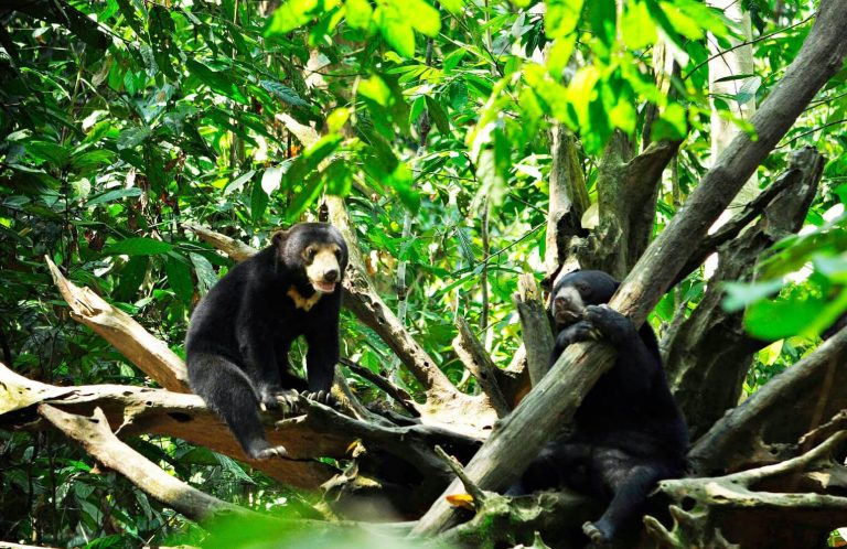 In the center for the protection of sun bears in Borneo