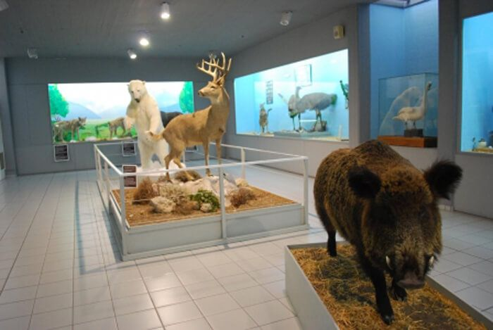 The Paleos Museum (The Samos Paleontological Museum)