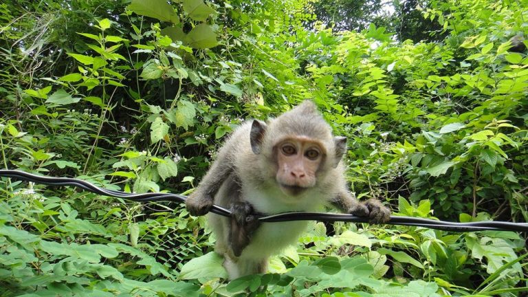 Monkeys live in the forests