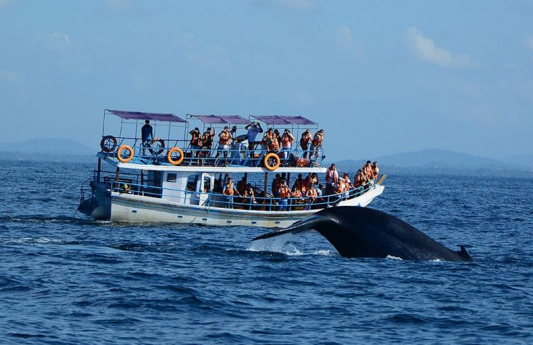 Photo: whale watching in Tangalle
