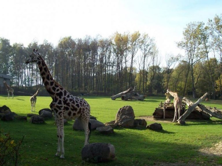 Animals at Ostrava Zoo