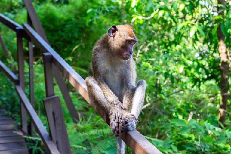 Excursion to the jungle with macaques living there