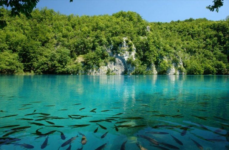 Fish in Plitvice Lakes
