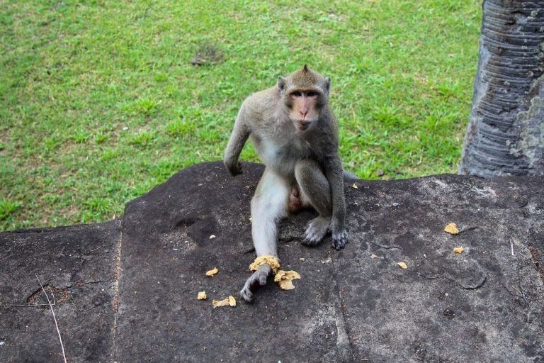 Monkey in the temple complex