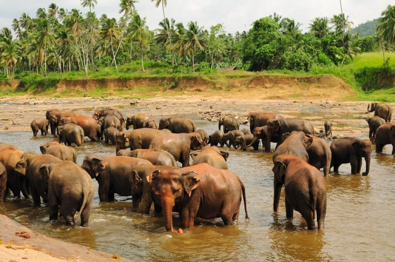 Photo: elephants swimming in the river