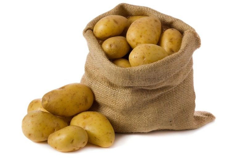 In the 16th century, potatoes were grown in Ireland