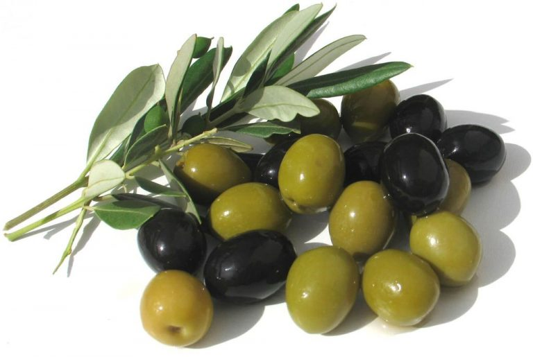 Olives of different stages of maturity - green and black