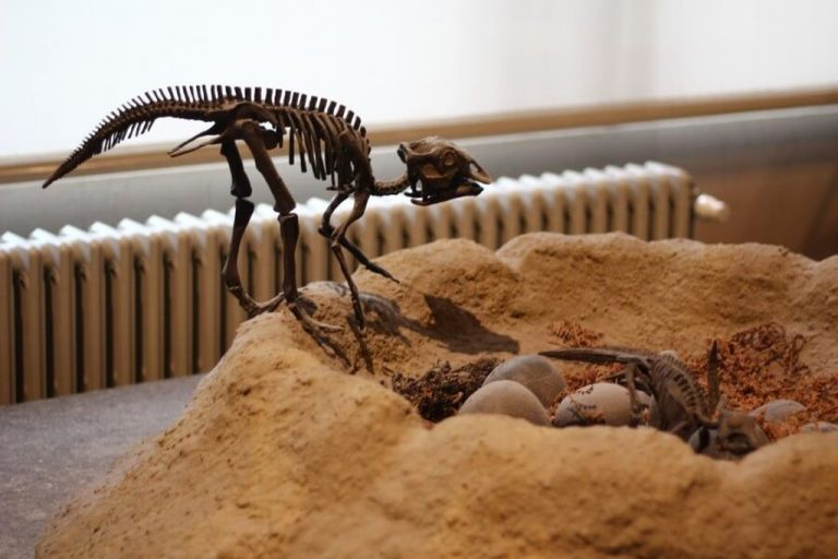 Various scenes from the life of dinosaurs are recreated on the stands.