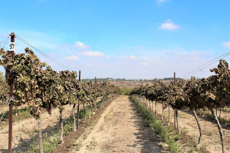 Wineries of Israel