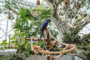Parakeet on a tree in Dubai zoological museum